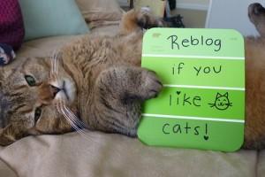 tumblrネコ好きリブログ