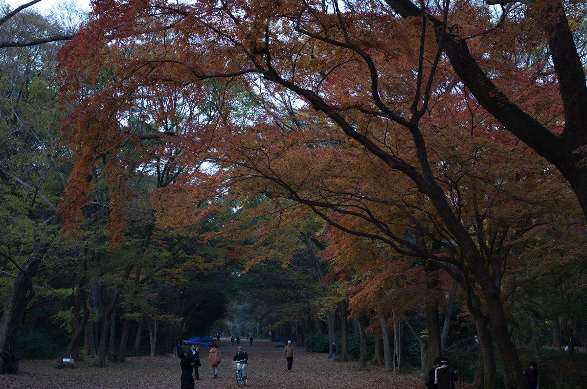下鴨神社糺の森紅葉3