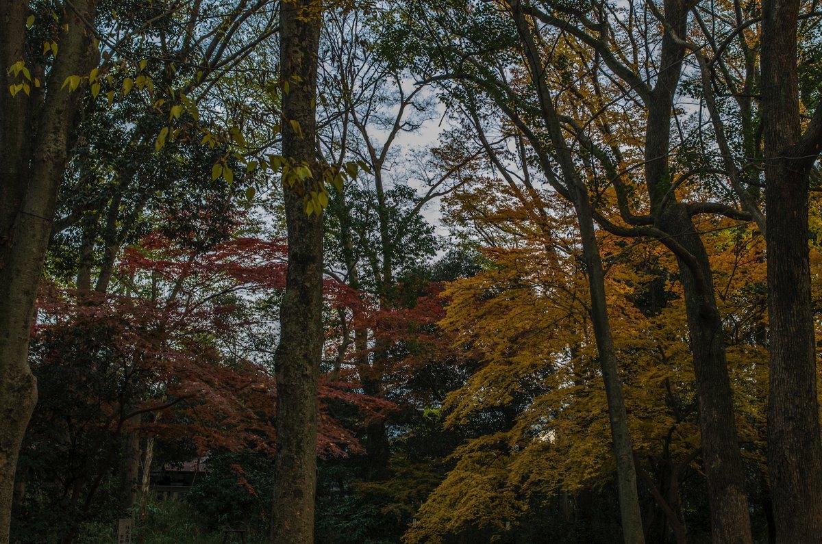 下鴨神社糺の森紅葉5
